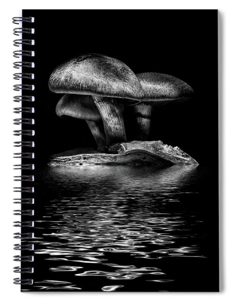 Toadstools On A Toronto Trail Reflection 3 Spiral Notebook