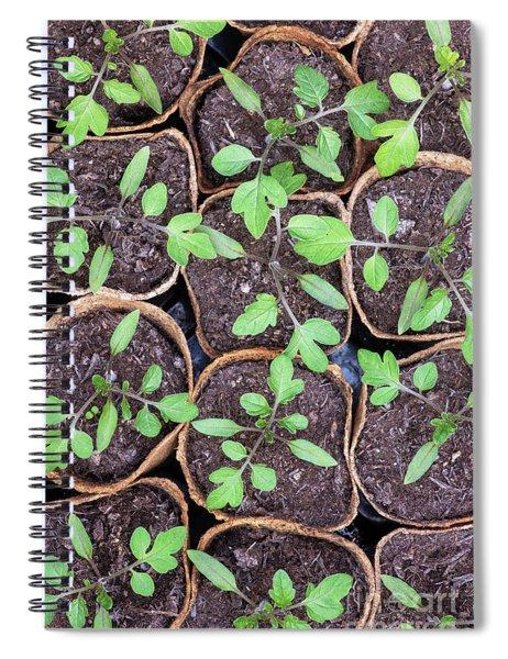 Tomato Seedlings  Spiral Notebook