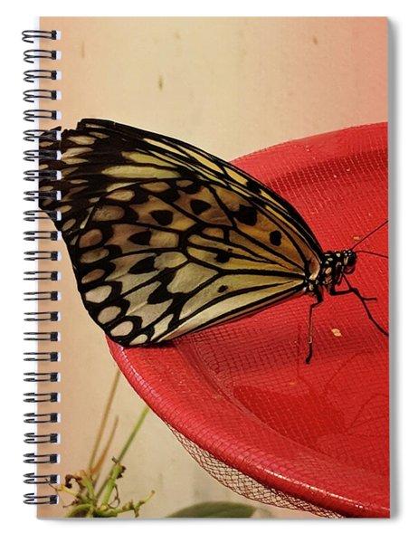 Torn Butterfly Spiral Notebook