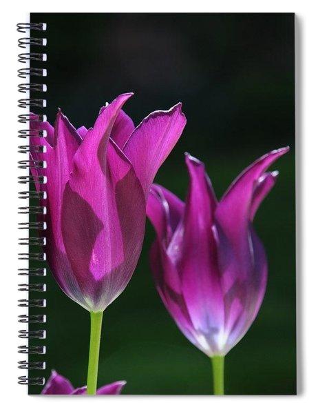 Translucent Tulips Spiral Notebook