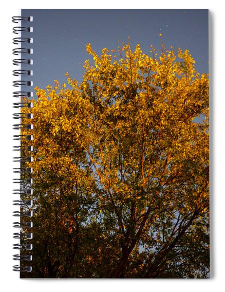 Tree And Stars Wide Spiral Notebook