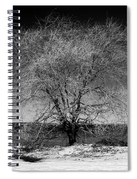 Tree At Oceans Edge Spiral Notebook