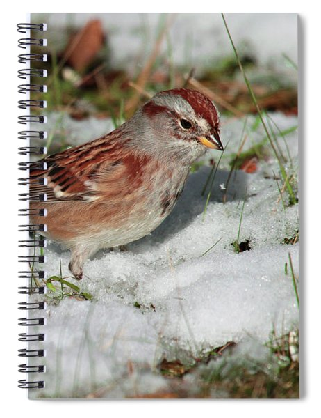 Tree Sparrow In Snow Spiral Notebook