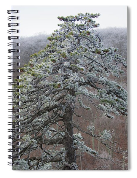 Tree With Hoarfrost Spiral Notebook