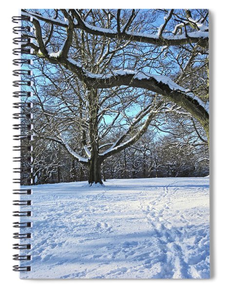 Trees In The Snow Spiral Notebook