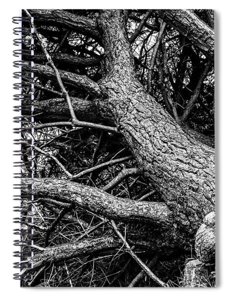 Trees, Leaning Spiral Notebook