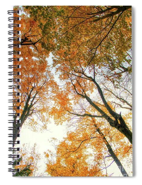 Trees Looking Up Spiral Notebook