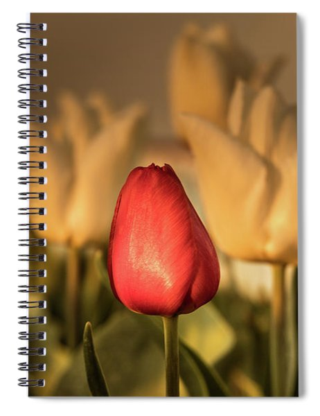 Spiral Notebook featuring the photograph Tulip Field by Anjo ten Kate