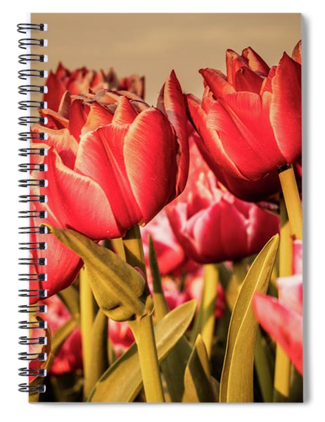 Spiral Notebook featuring the photograph Tulip Fields by Anjo Ten Kate