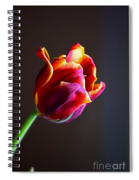 Spiral Notebook featuring the photograph Tulip In The Light by Patti Whitten