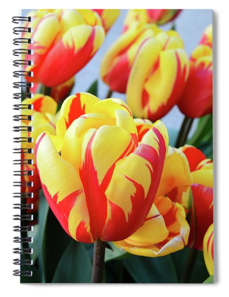 Tulips And Tiger Stripes Spiral Notebook