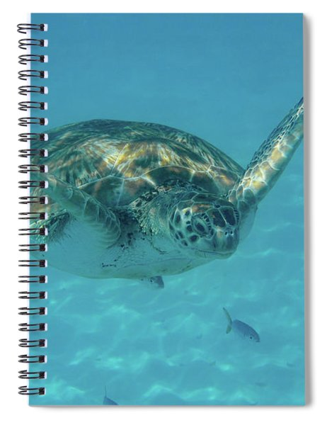 Turtle Approaching Spiral Notebook