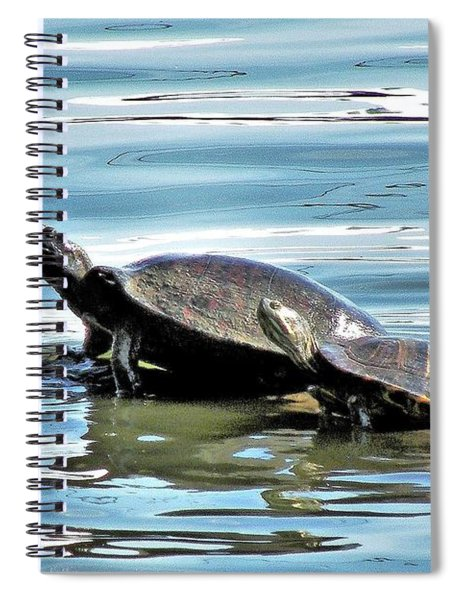 Turtles - Mother And Child Spiral Notebook