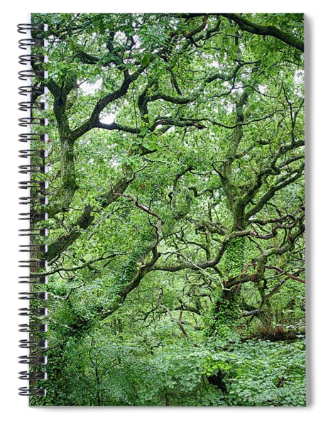 Twisted Forest Full Color Spiral Notebook