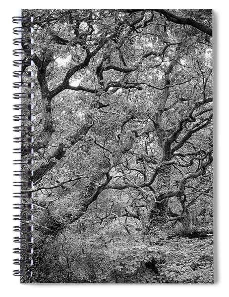 Twisted Forest Spiral Notebook
