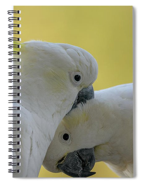 Two Cockatoos Spiral Notebook