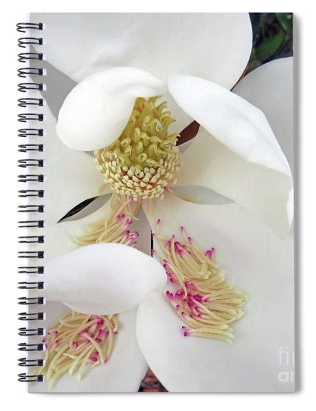 Unfolding Beauty Of Magnolia Spiral Notebook