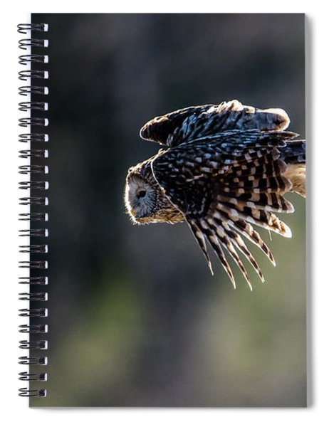 Ural Owl Flying Against The Light To Catch A Prey  Spiral Notebook