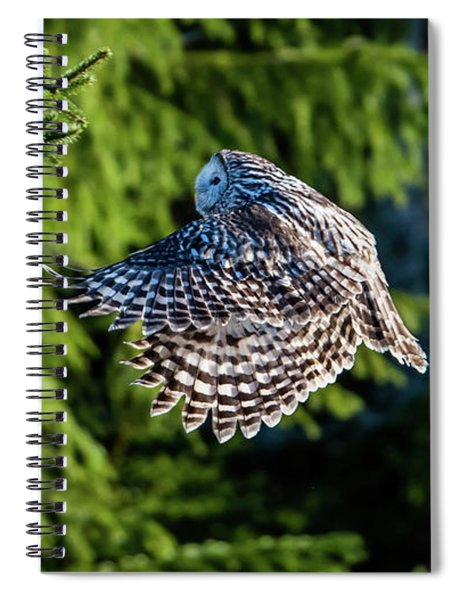 Ural Owl Flying In The Fir Forest With Sunshine On Its Back Spiral Notebook