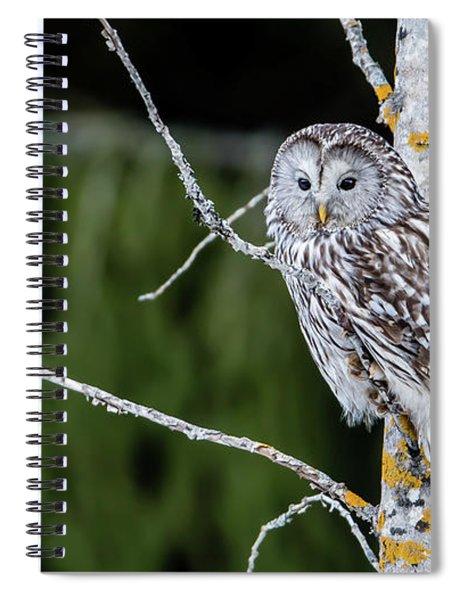Ural Owl Perching On An Aspen Twig Spiral Notebook