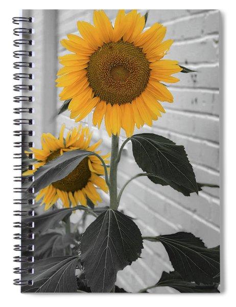 Urban Sunflower - Black And White Spiral Notebook