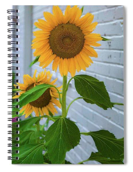 Urban Sunflower Spiral Notebook