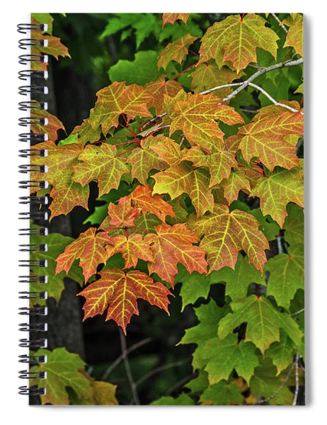 Various Stages Of Fall Color On Maple Leaves Spiral Notebook