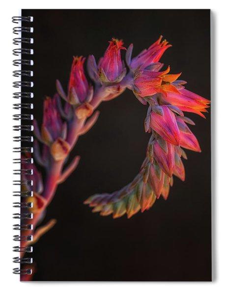 Vibrant Arc Spiral Notebook