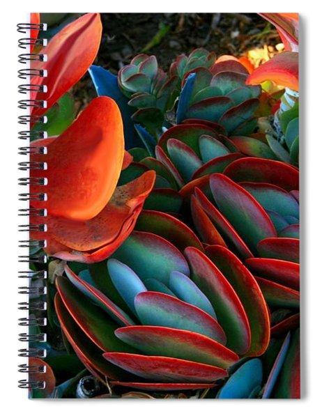 Vivid Paddle-leaf Succulent Spiral Notebook