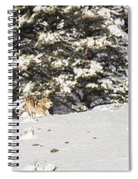 W14 Spiral Notebook