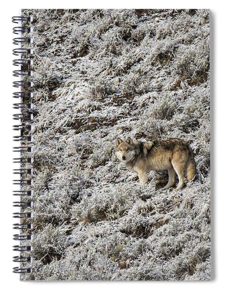 W17 Spiral Notebook