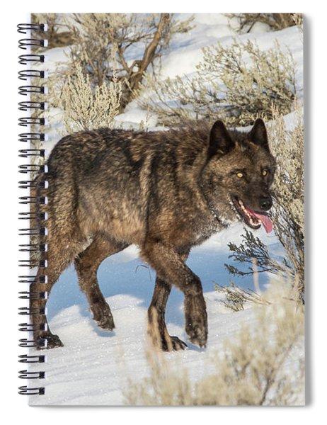 W28 Spiral Notebook