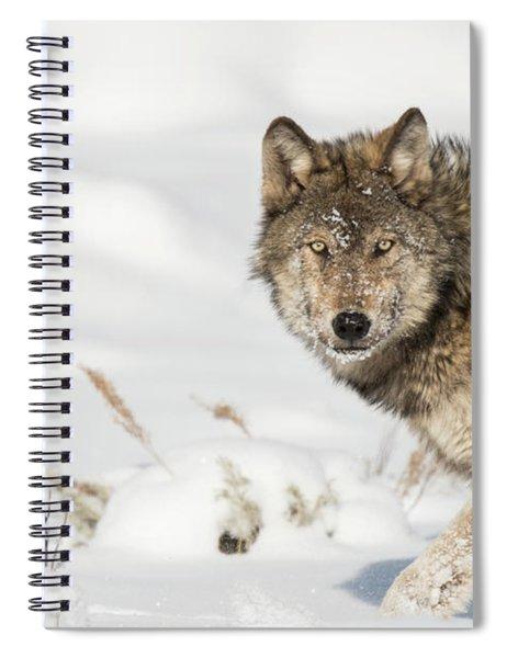 W35 Spiral Notebook
