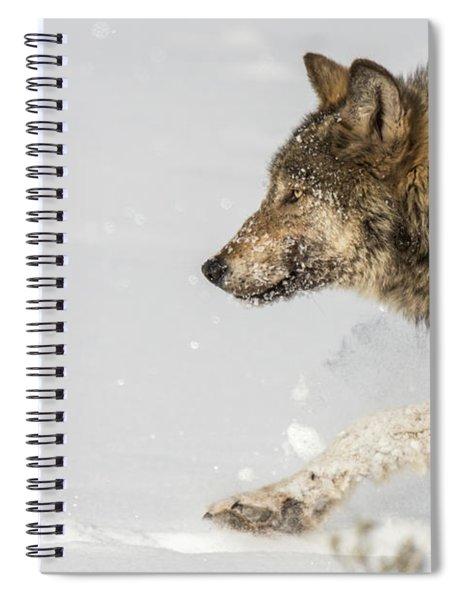 W36 Spiral Notebook