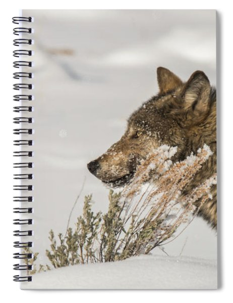 W39 Spiral Notebook