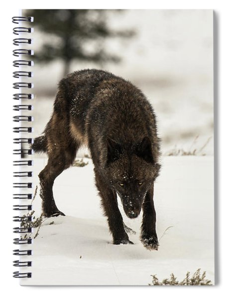 W45 Spiral Notebook