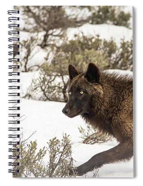 W5 Spiral Notebook