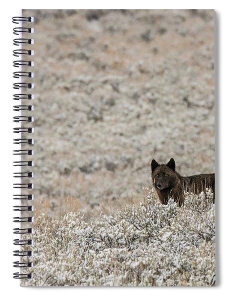 W50 Spiral Notebook