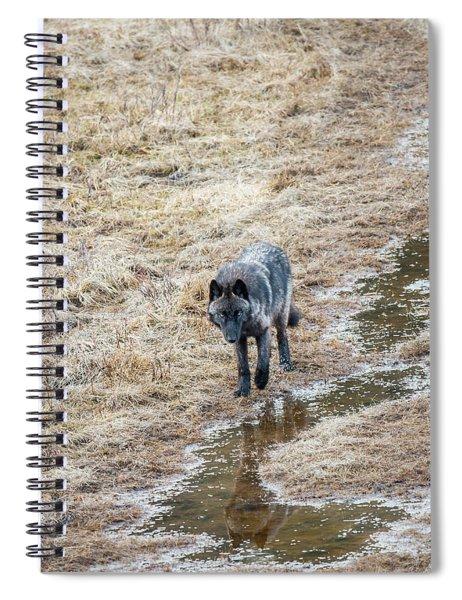 W51 Spiral Notebook