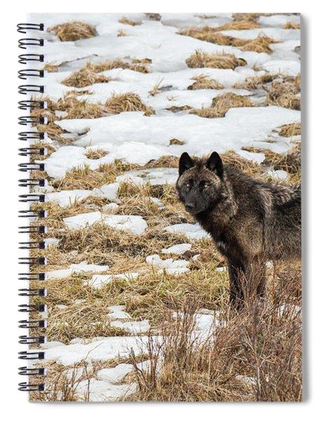W59 Spiral Notebook