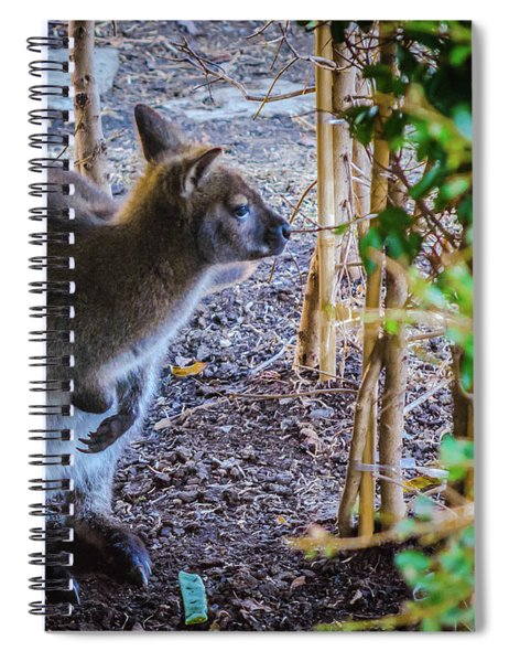 Wallaby Spiral Notebook