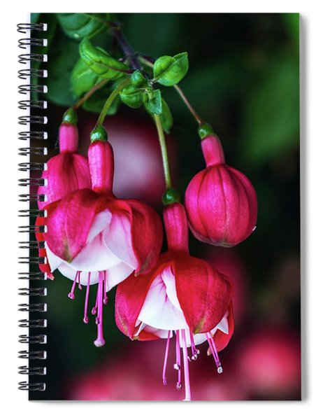Wallpaper Flower Spiral Notebook