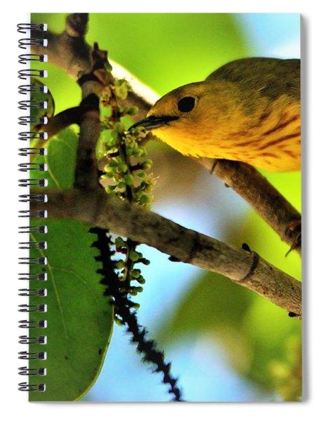 Warbler's Delight Spiral Notebook