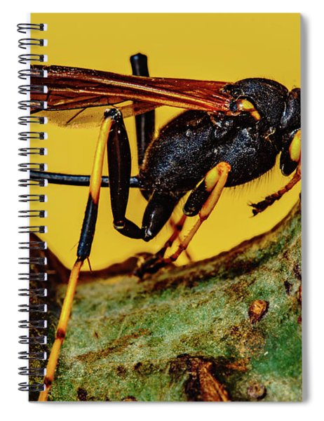 Wasp Just Had Enough Spiral Notebook