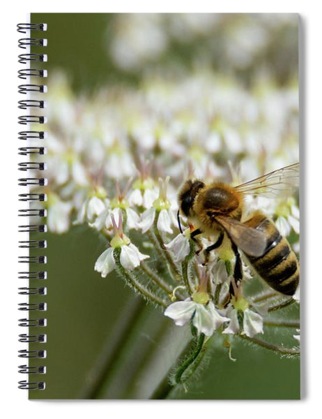 Wasp On Cow Parsley Spiral Notebook by Scott Lyons