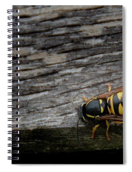 Wasp On Wood Spiral Notebook