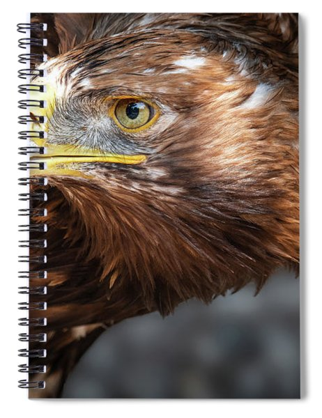 Watching Eagle Spiral Notebook