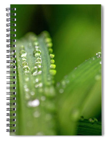 Water Drops On Leafs Spiral Notebook