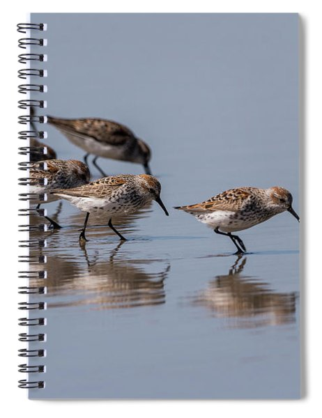 Western Sandpipers And Reflection Spiral Notebook