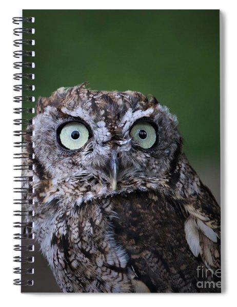 Western Screech Owl Spiral Notebook